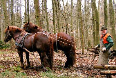 Infomedia Augenweide 2009 Kaltbl Tig